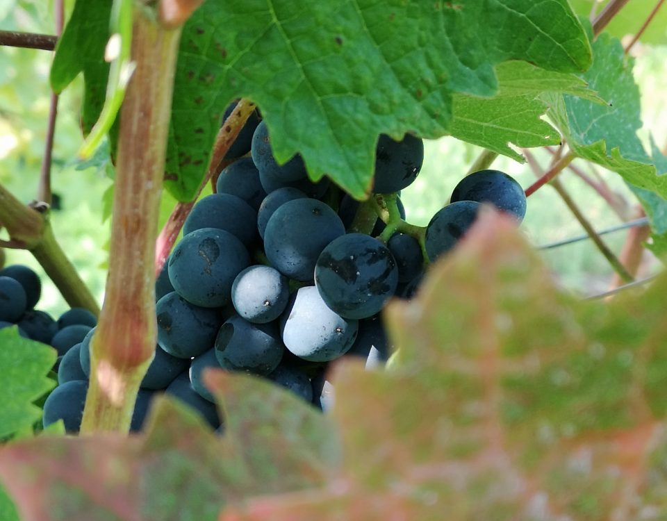 limburgse wijn