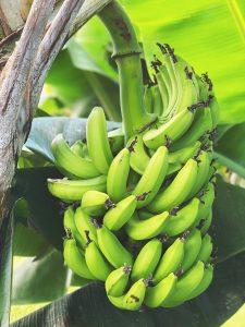 bananen tros Curacao