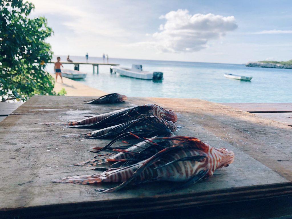 Curacao en lionfish