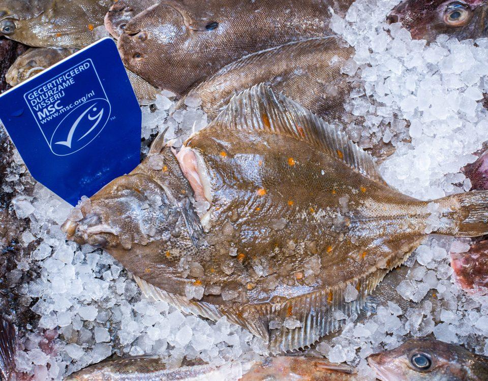 MSC keurmerk vis