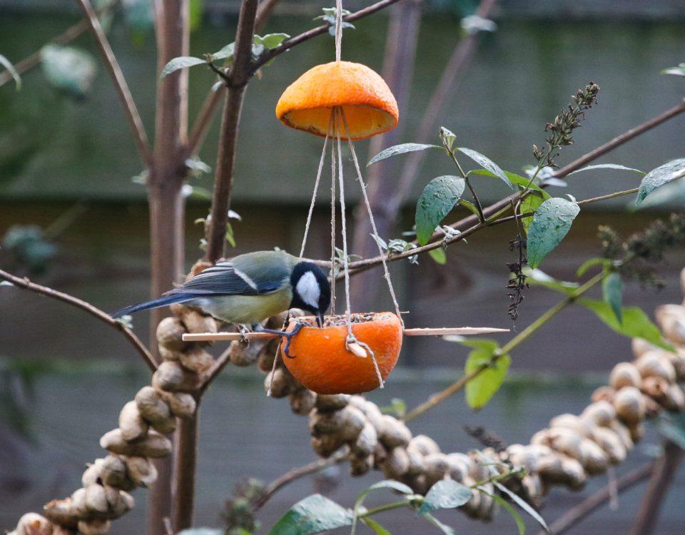 vogelvoederbakje